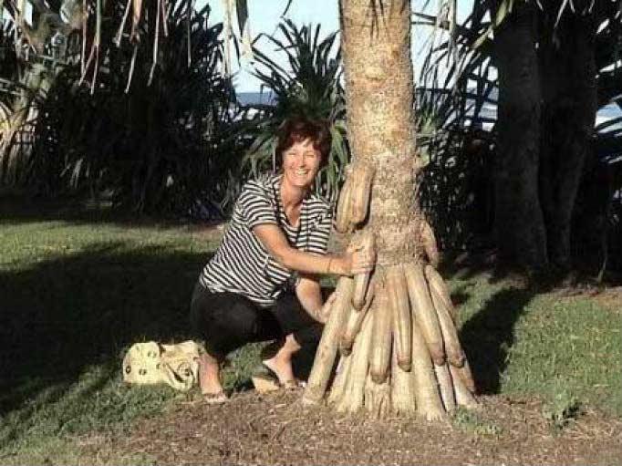 Необыкновенная   природа - Страница 3 Palm